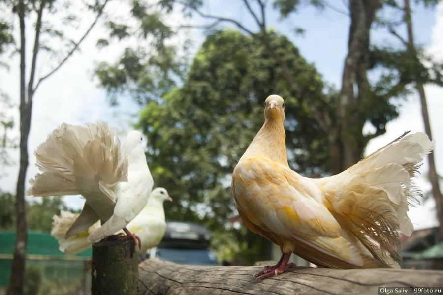 Paradise Park Farm, Koh Samui, Thailand photography