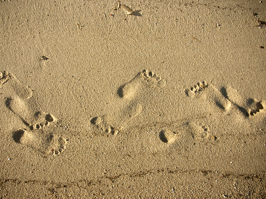Footprints in the sand on the shore