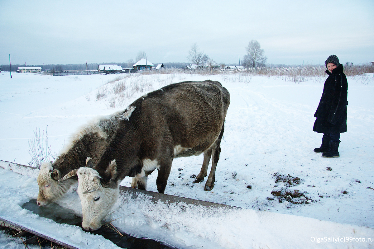 A boy and a cow in Russian village