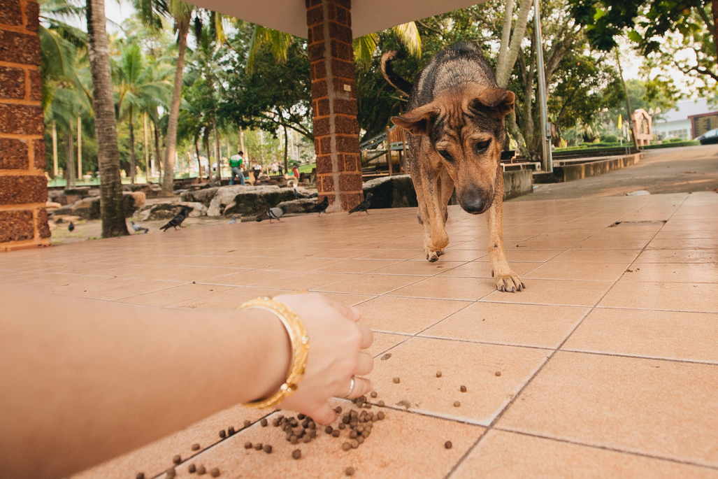 Feeding the animals in Buddhist wedding ceremony