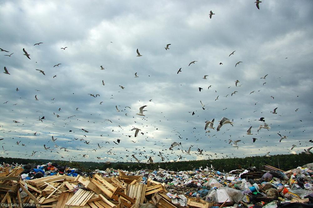 Dump in Russia (16)