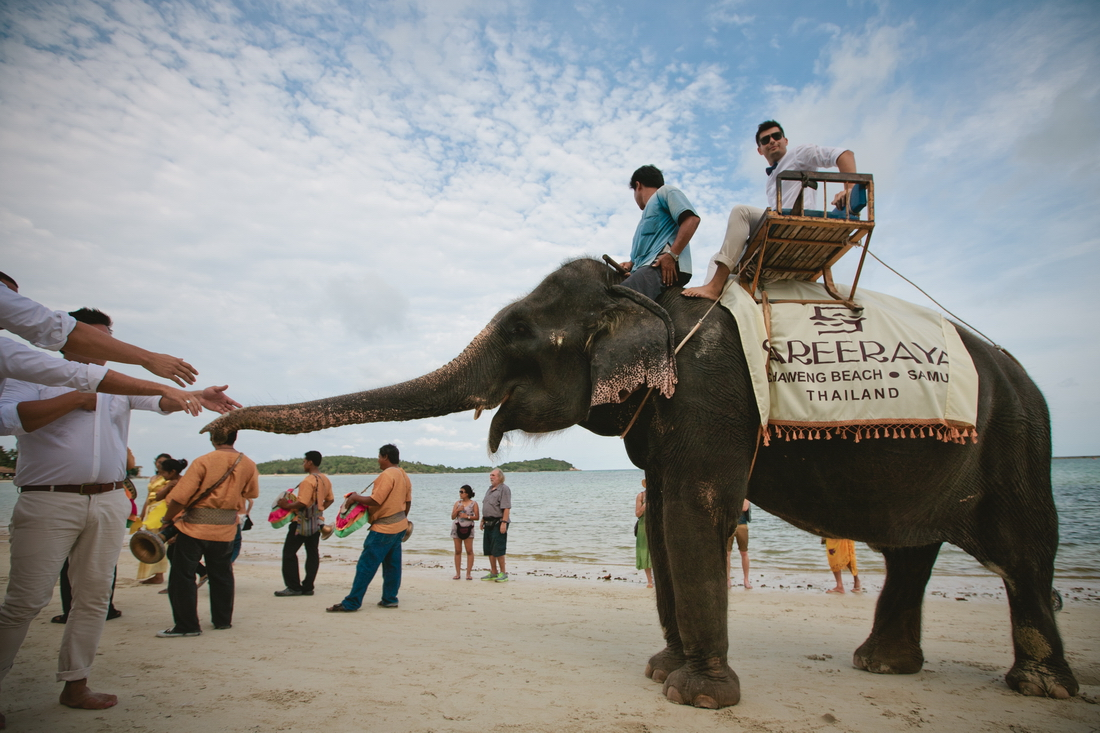 Elephant at the wedding hotel Seera Samui
