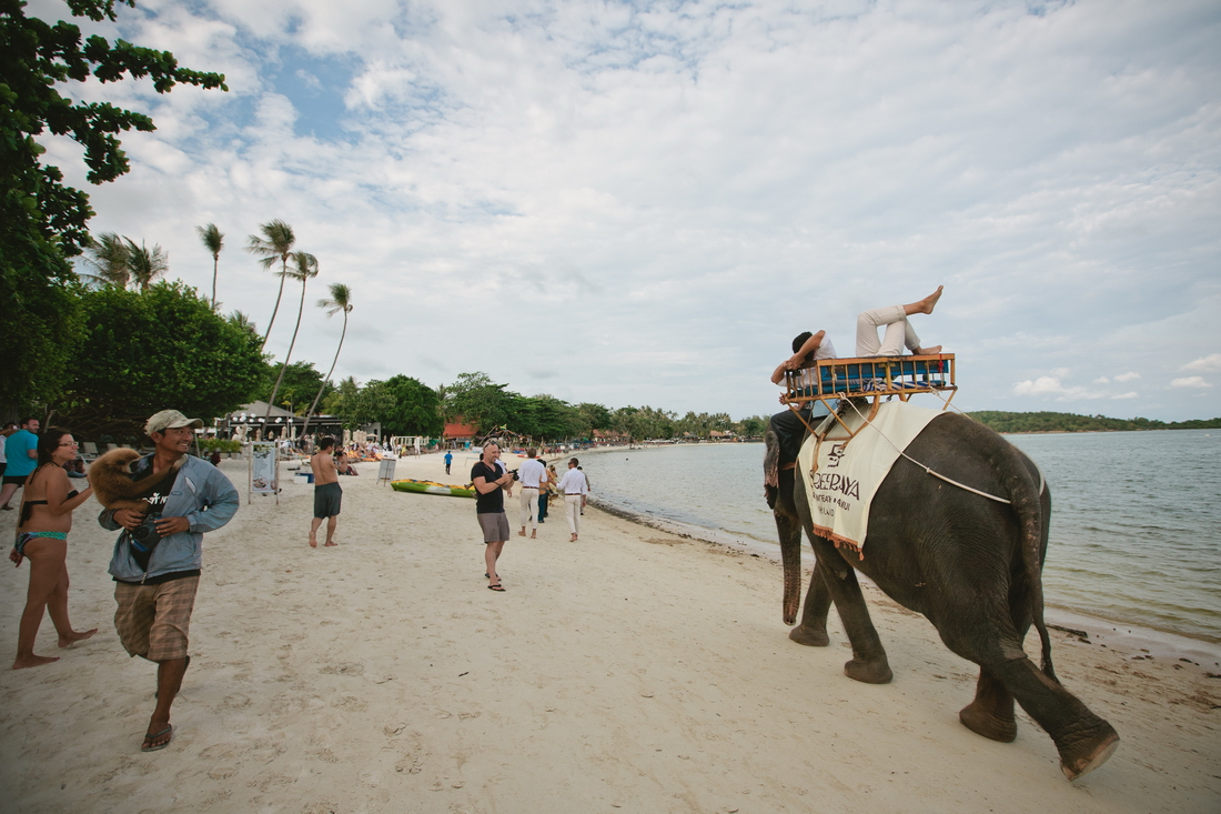 Elephant at the wedding