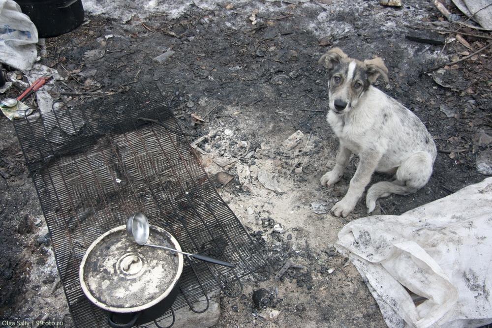 Dump in Russia (9)