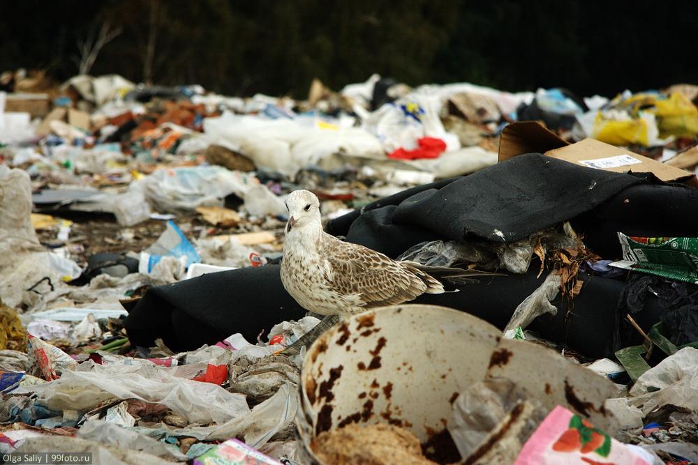 Dump in Russia (7)