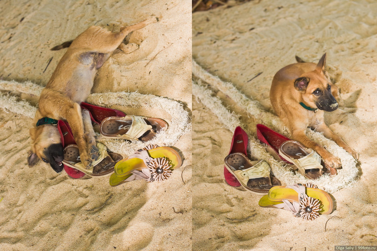 Thailand dog