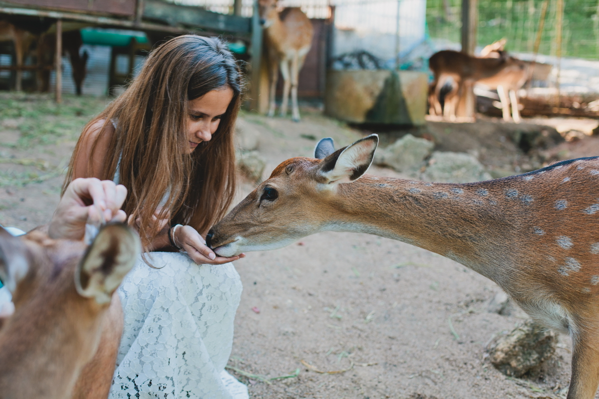 Feed the deer in Koh Samui