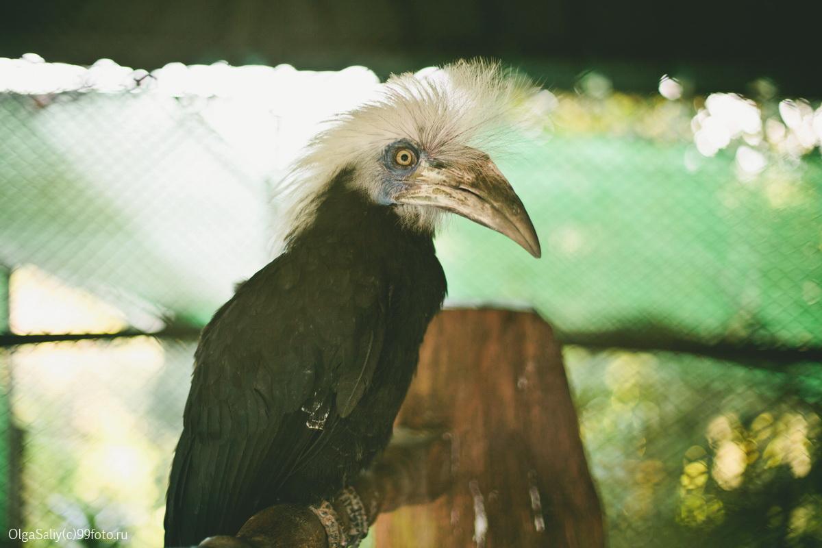 Strange Bird in Paradise Park