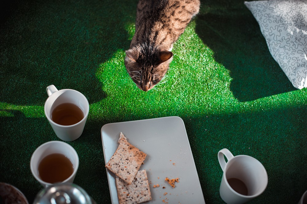 Cat and eat