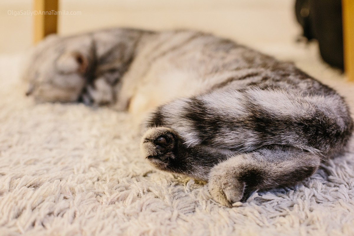 Cat cafe in Bangkok (35)