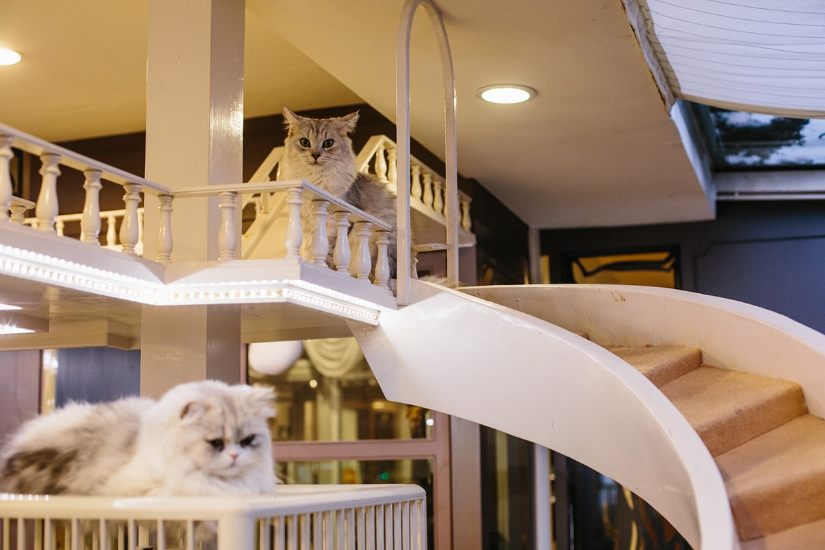 Cat cafe in Bangkok (34)