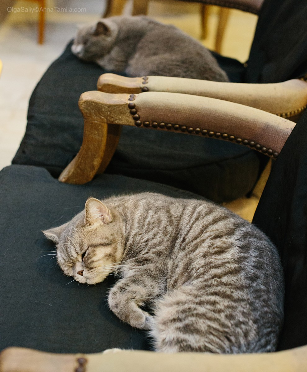 Cat cafe in Bangkok (32)