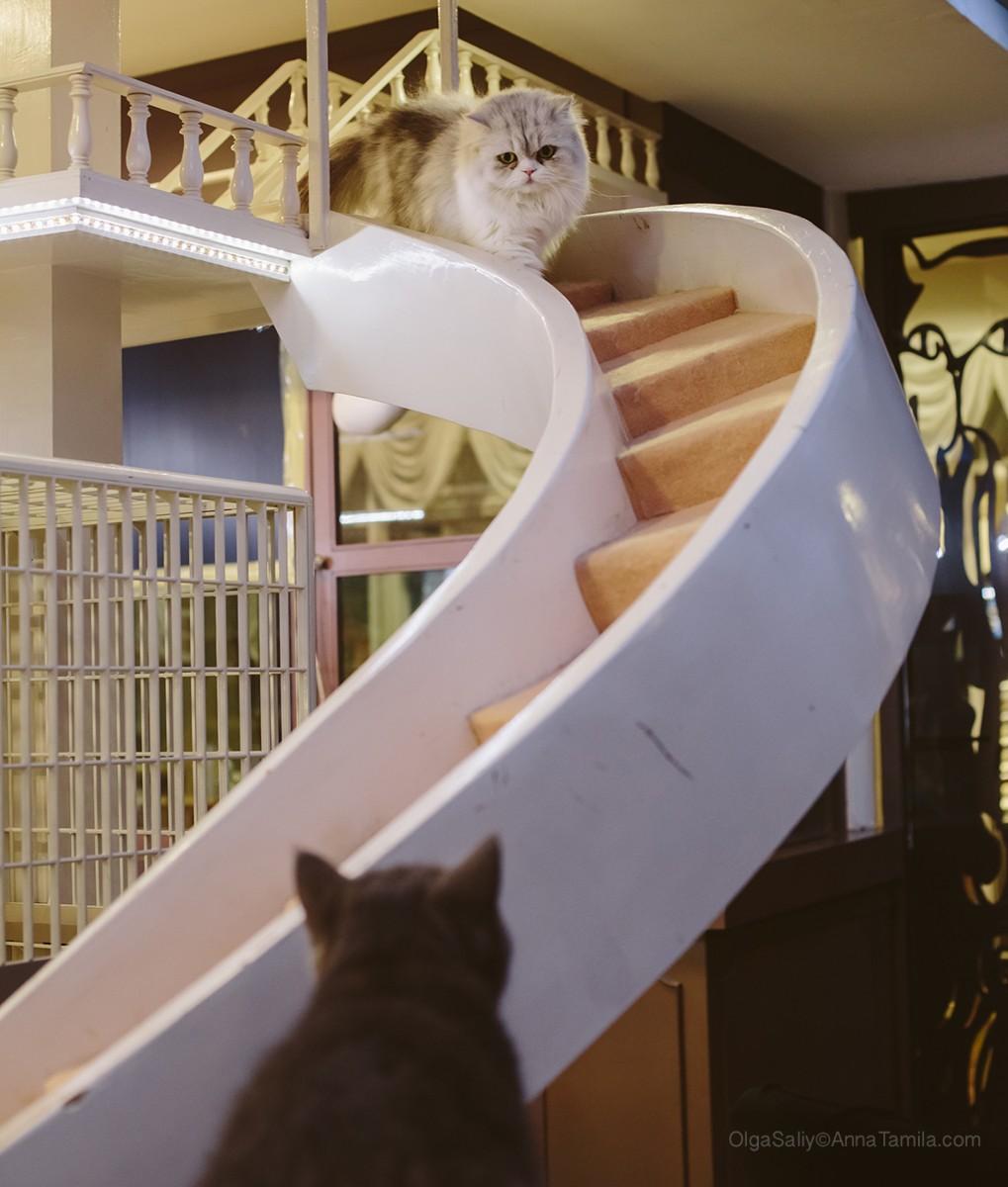 Cat cafe in Bangkok (31)
