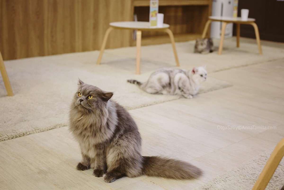 Cat cafe in Bangkok (29)