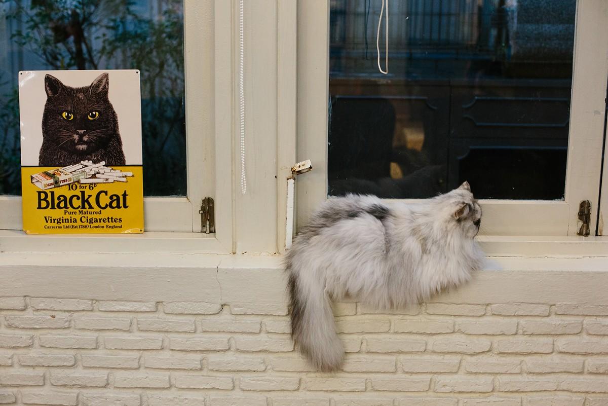 Cat cafe in Bangkok (27)