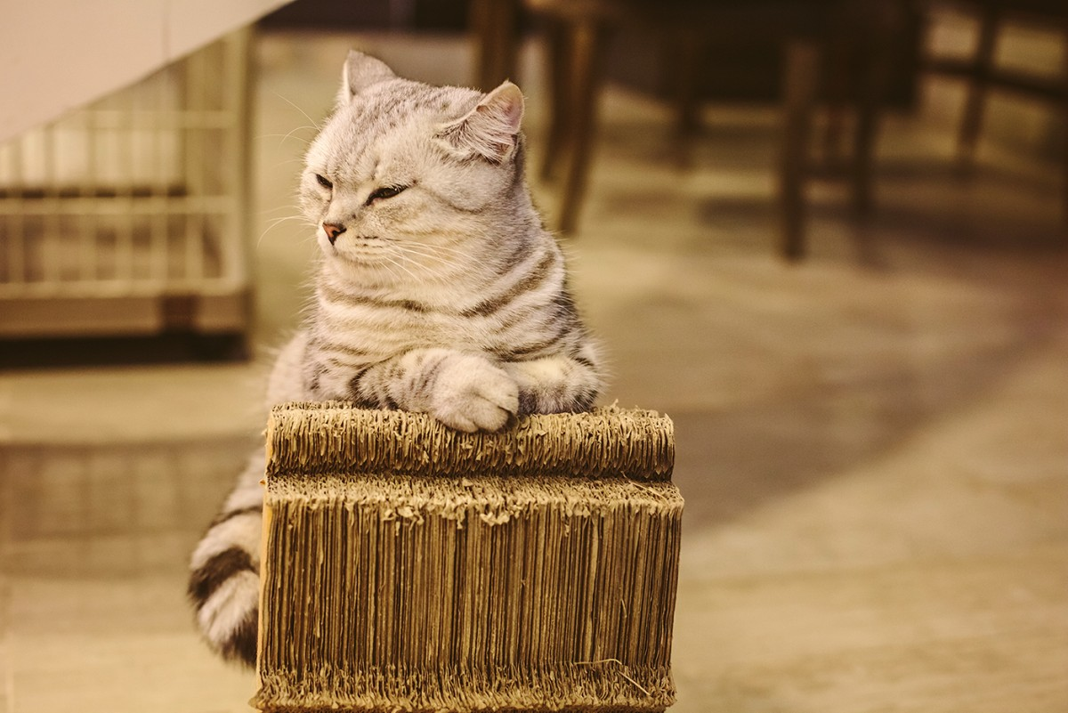 Cat cafe in Bangkok (23)
