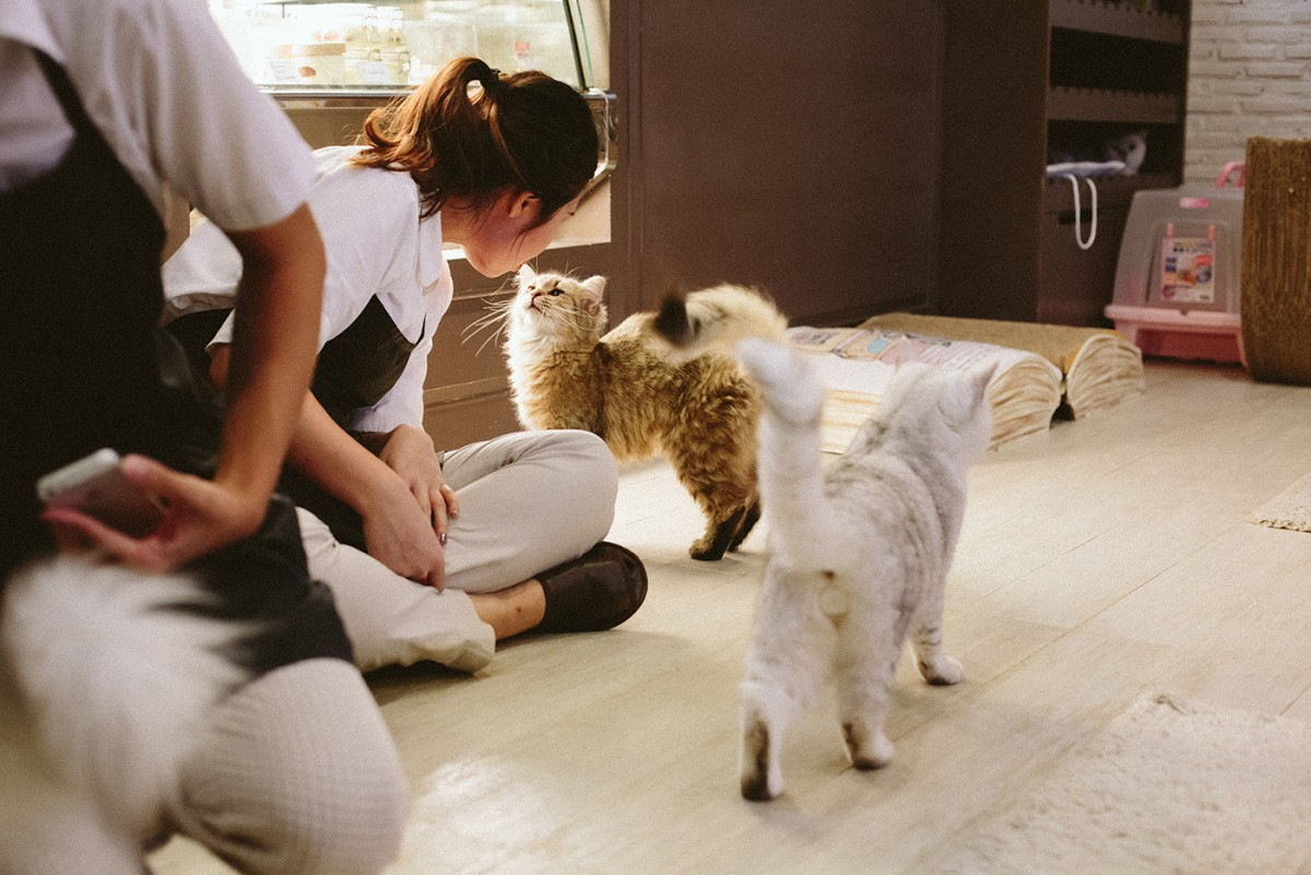 Cat cafe in Bangkok (19)
