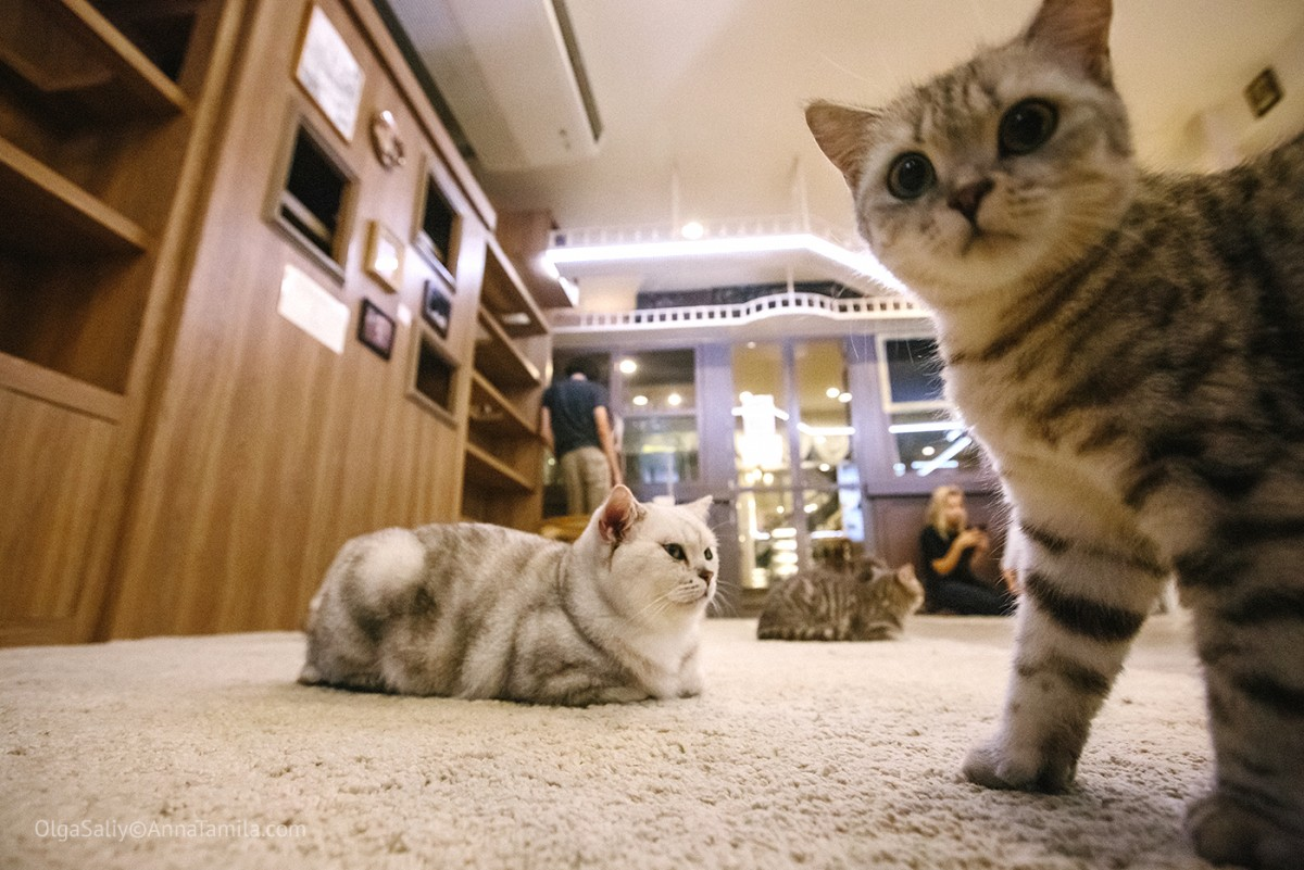 Cat cafe in Bangkok (17)
