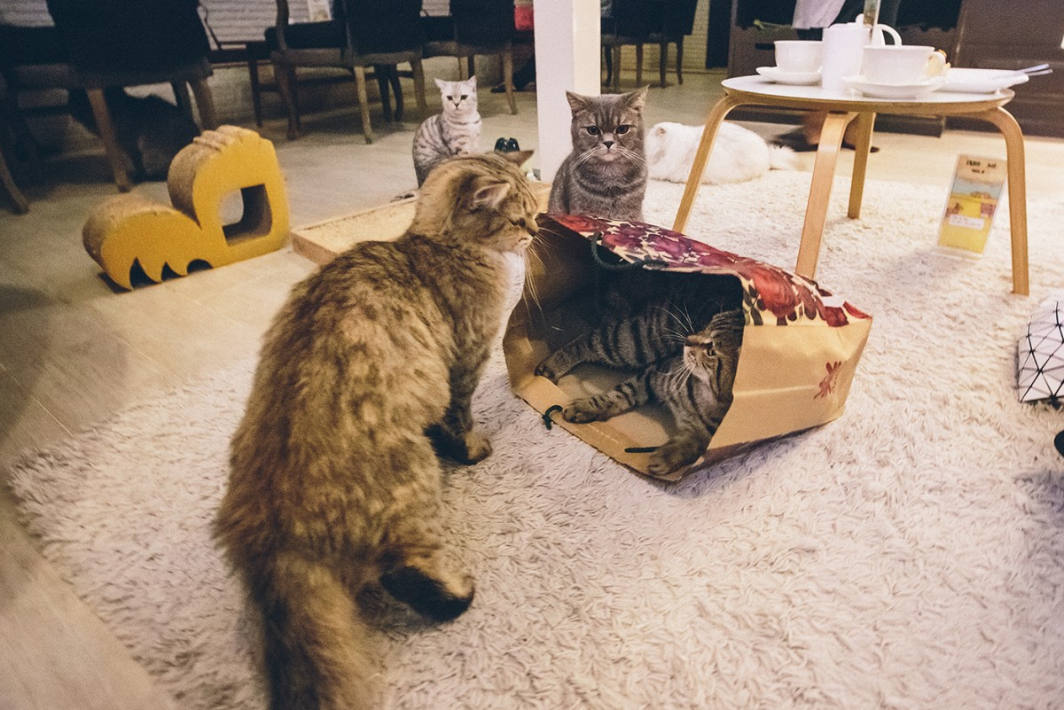 Cat cafe in Bangkok (16)
