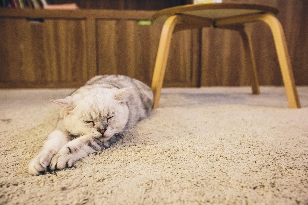 Cat cafe in Bangkok (12)