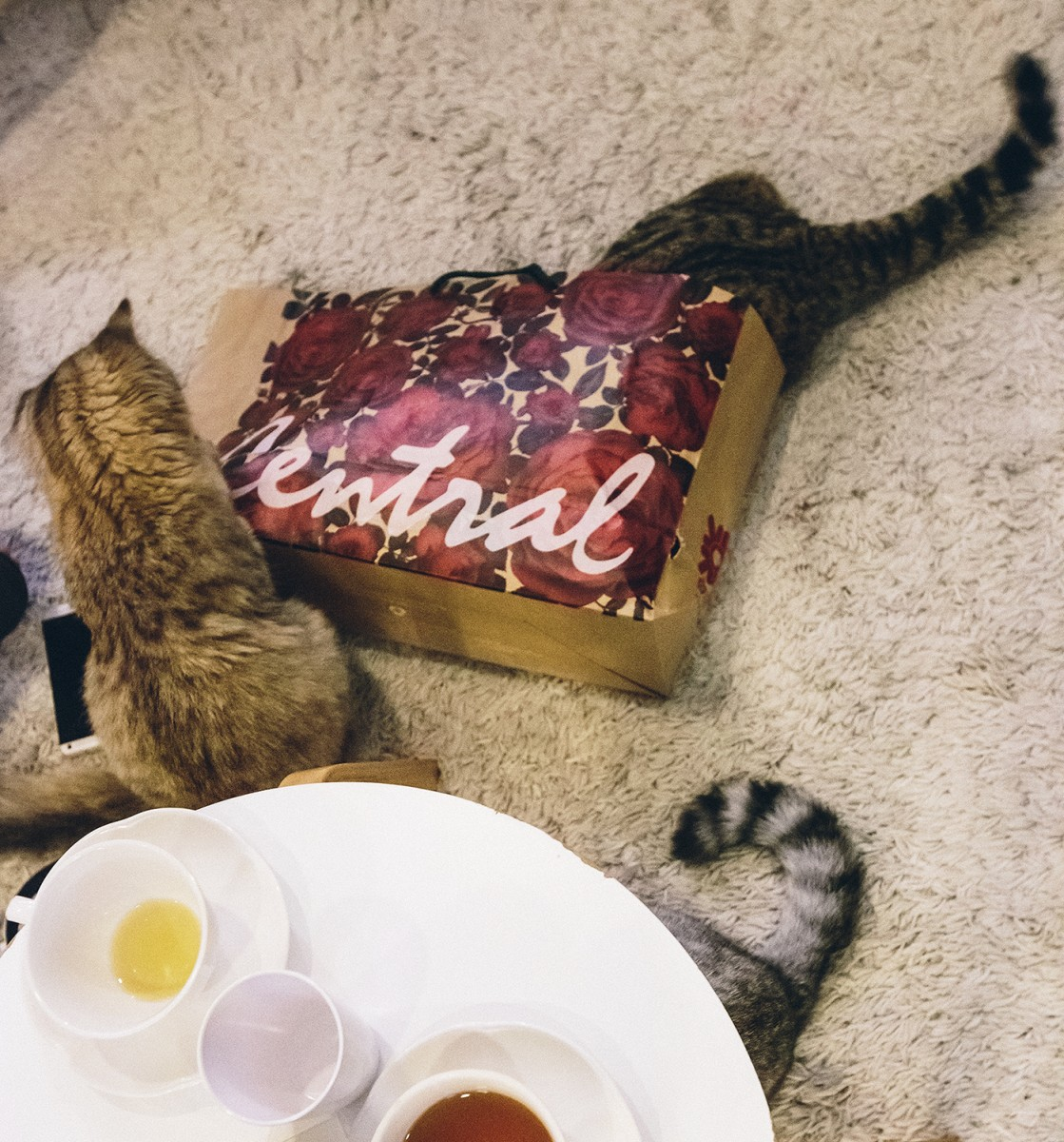 Cat cafe in Bangkok (10)