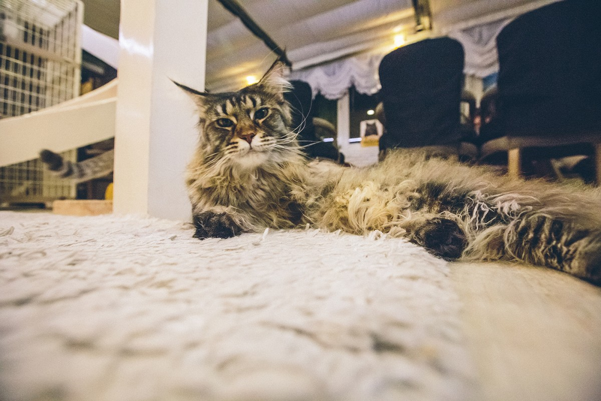 Cat cafe in Bangkok (9)