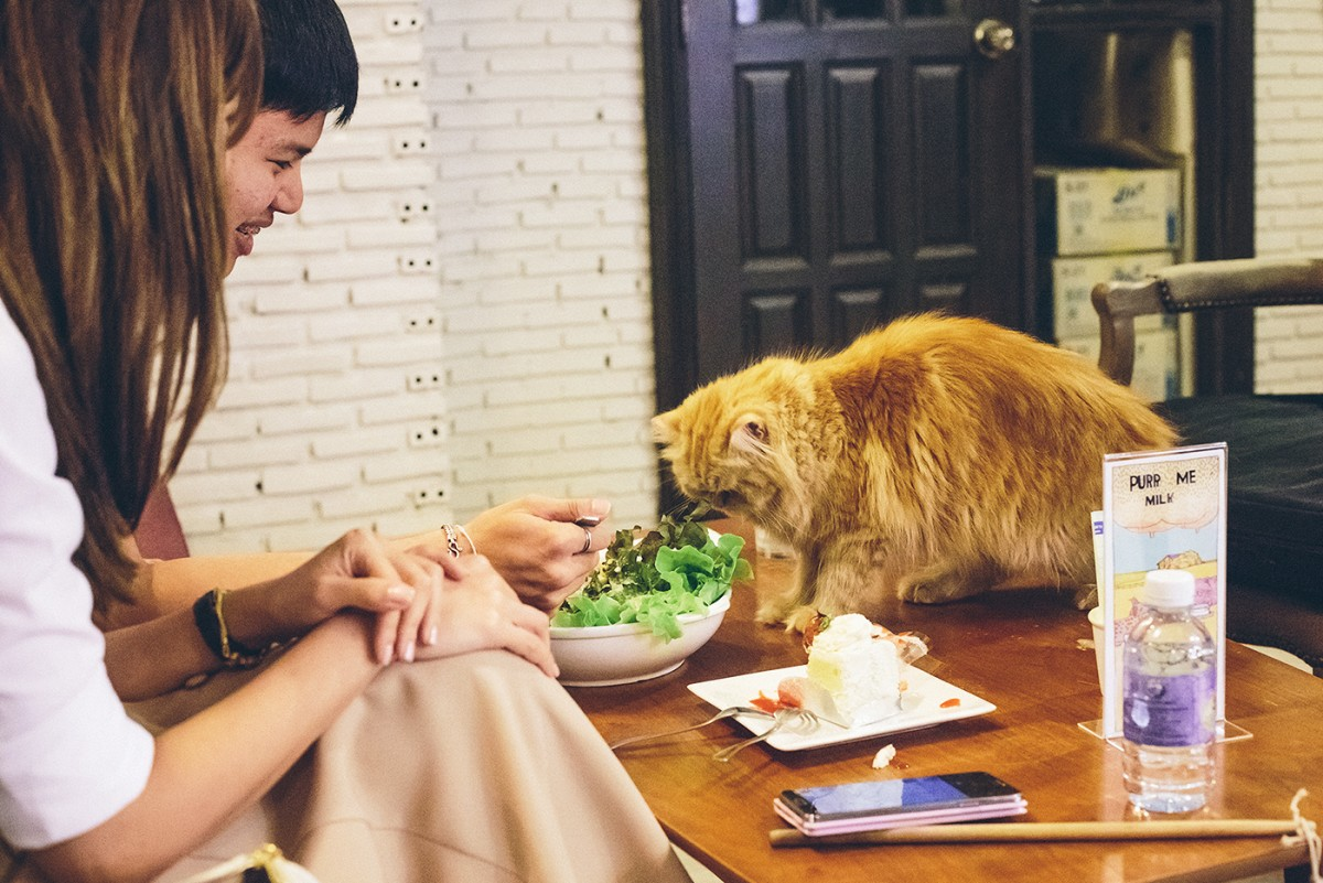 Cat cafe in Bangkok (6)