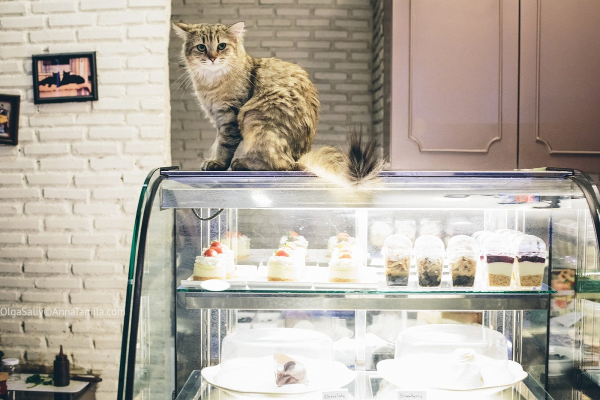 Cat cafe in Bangkok (5)