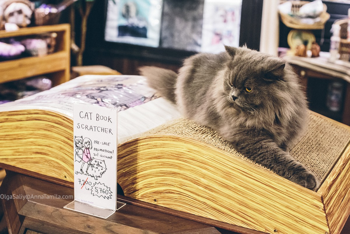 Cat cafe in Bangkok (1)