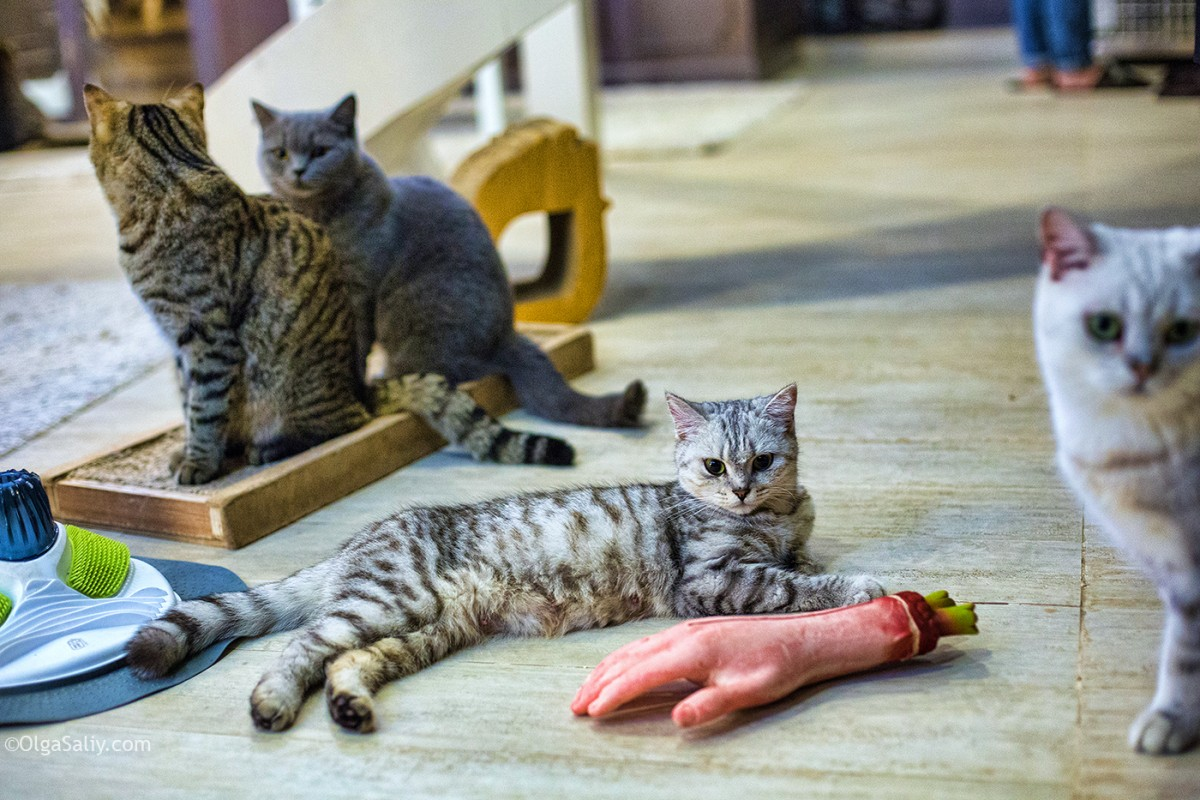 Great place in Bangkok, cat cafe