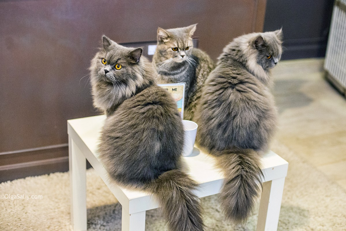 The best cat cafe in Bangkok, Thailand