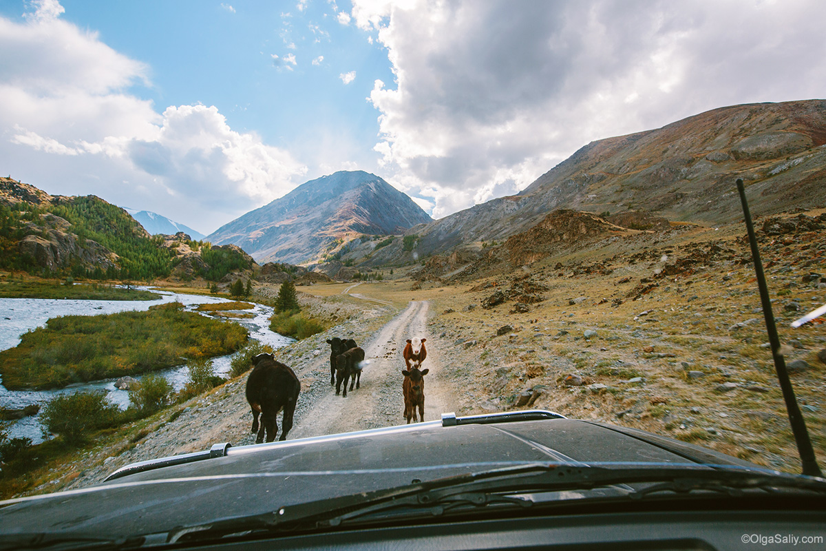 Auto travel in Altai Mountains (15)