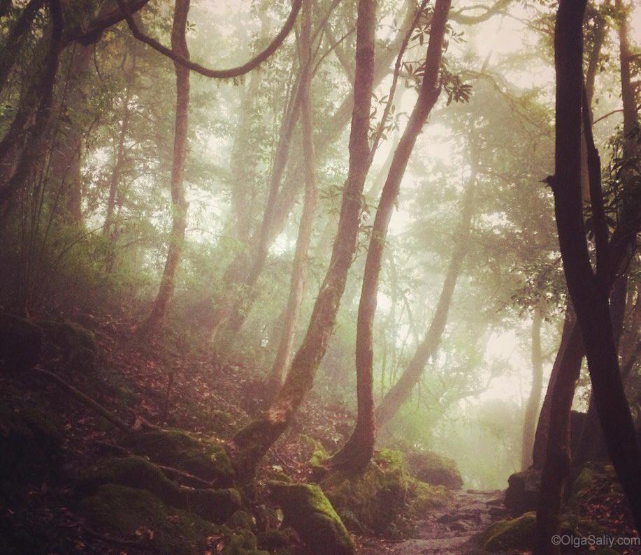 Jungle Forest ABC Trek Nepal