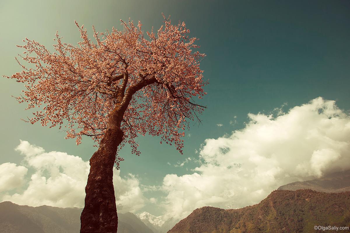 Sakura in Nepal treking