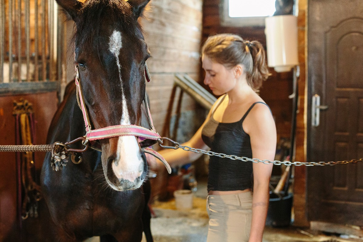 horse in the stables, Novosibirsk