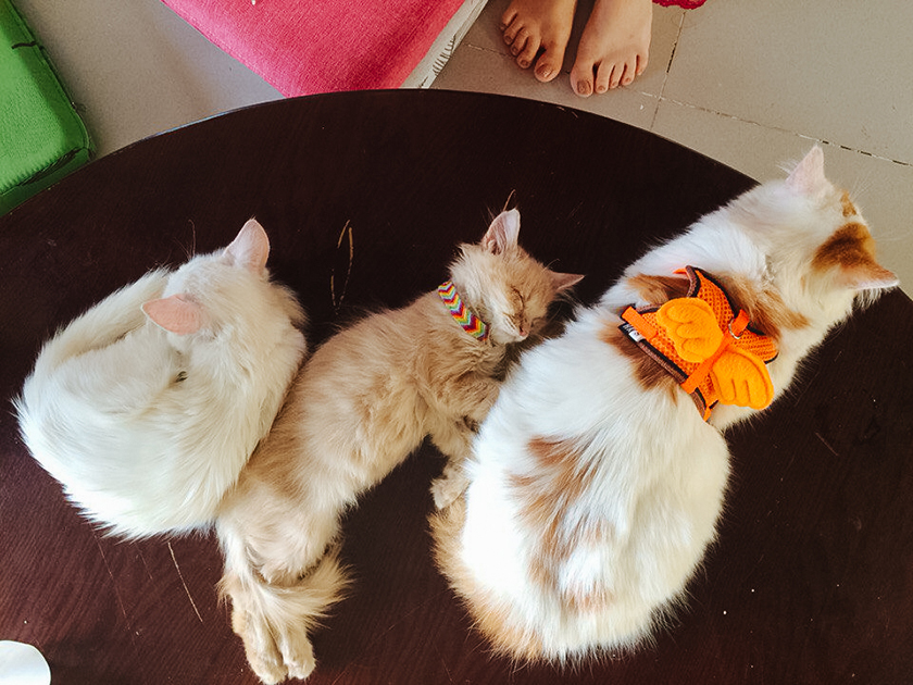 Cats in CatCafe