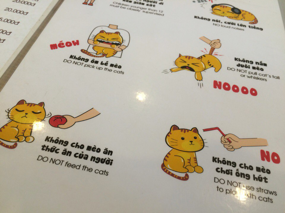 rules in Cat Café