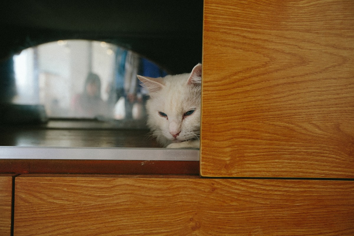White cat in cat house