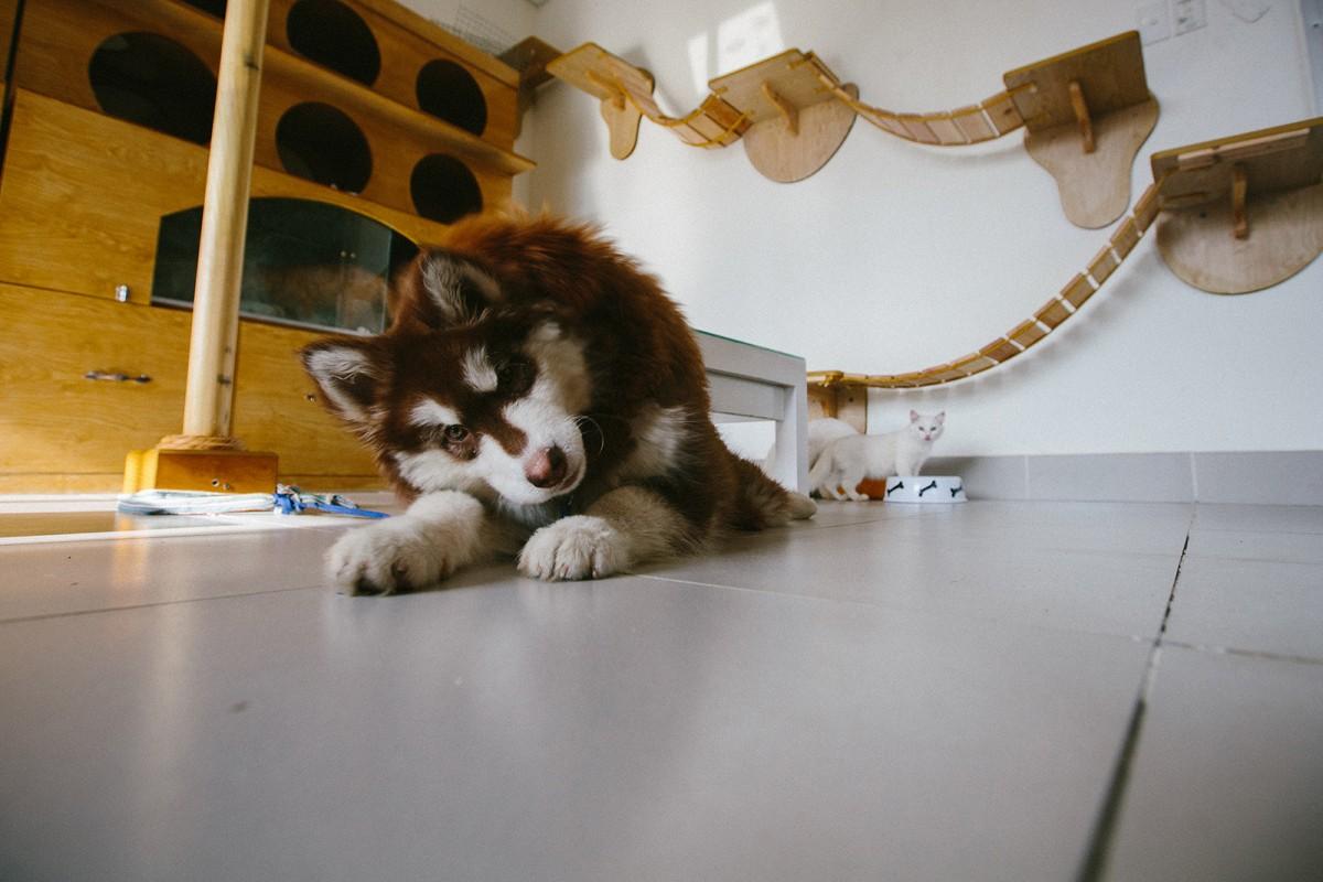 Dog in Cat cafe