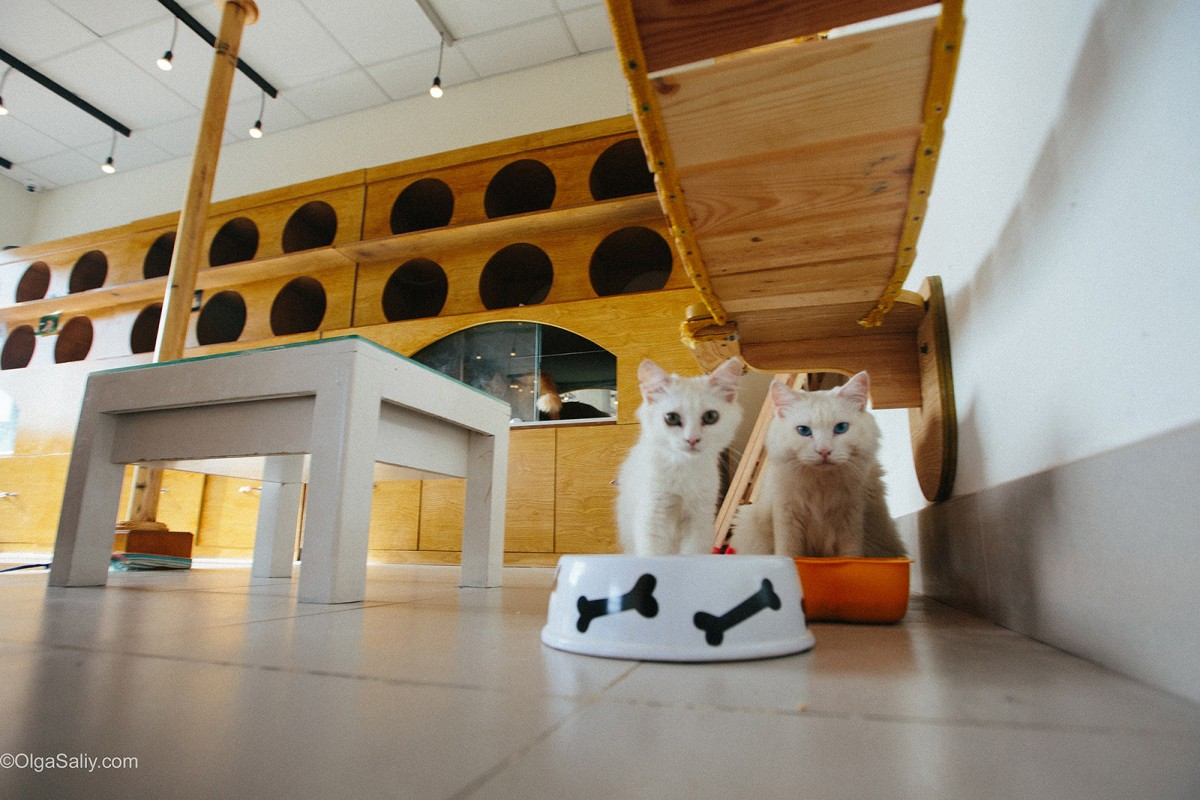 Cat Cafe VungTau Vietnam (9)