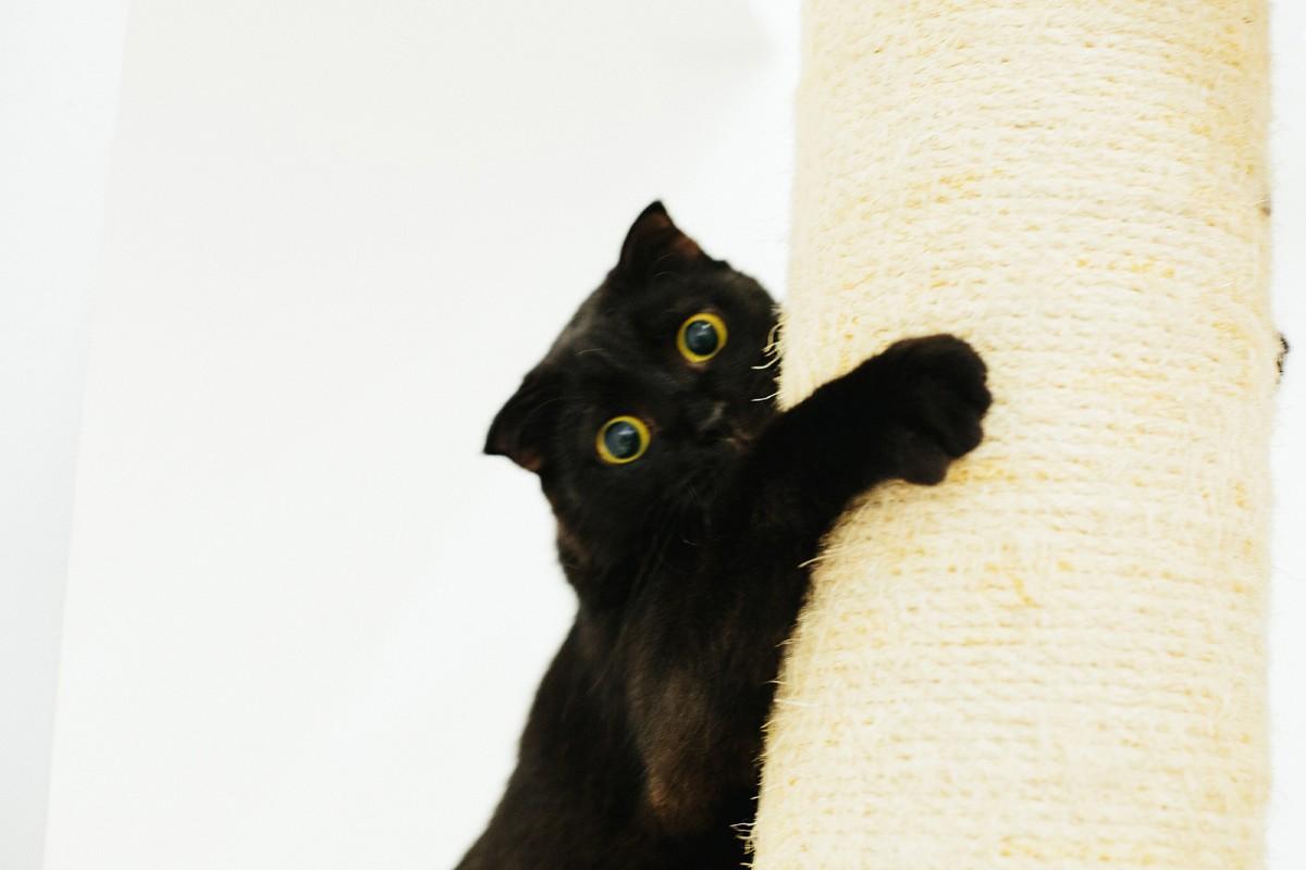 Black crazy cat