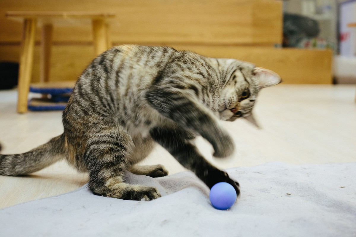 Cat is playing