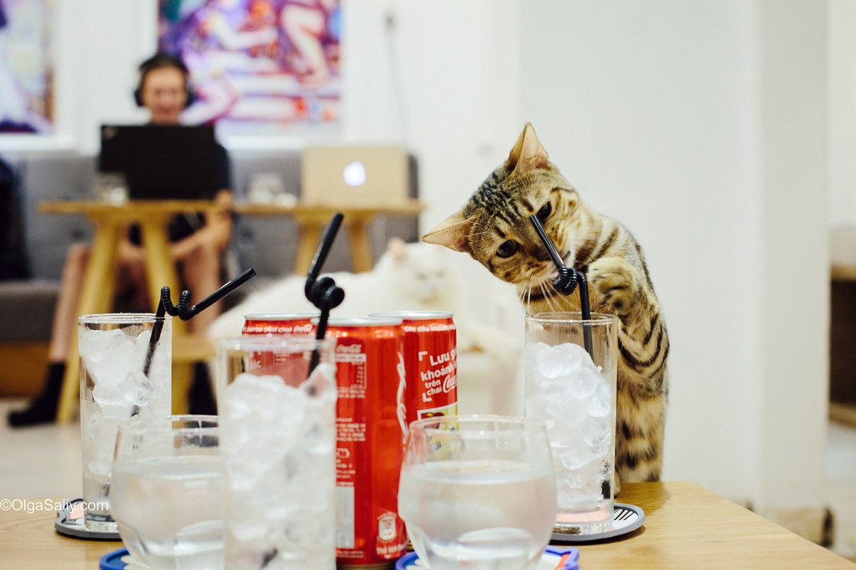 ICHI Cat Café Ho Chi Minh City, Vietnam (14)