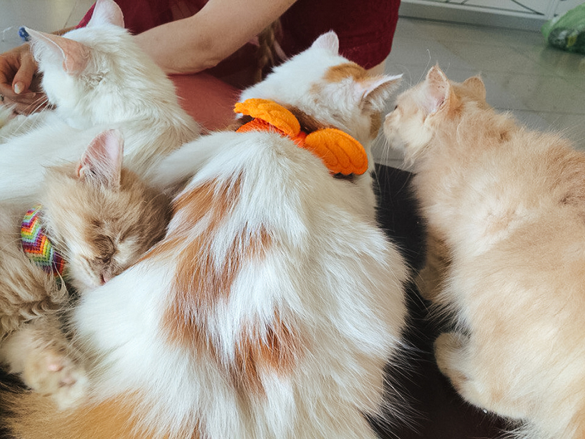 Cat Cafe VungTau Vietnam (2)