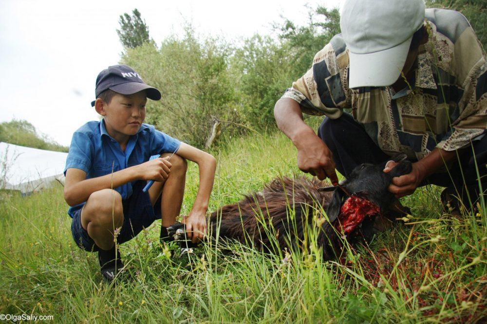 Kyrgyzstani killing goat
