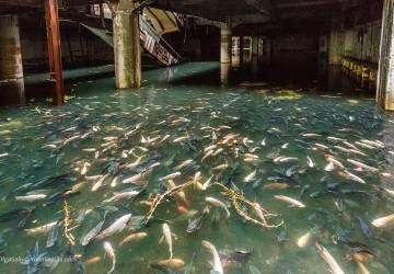 Abandoned shopping mall in Bangkok, amazing aquarium with thousands of fish